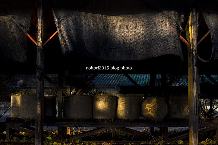 牧草ロールのある風景02.jpg